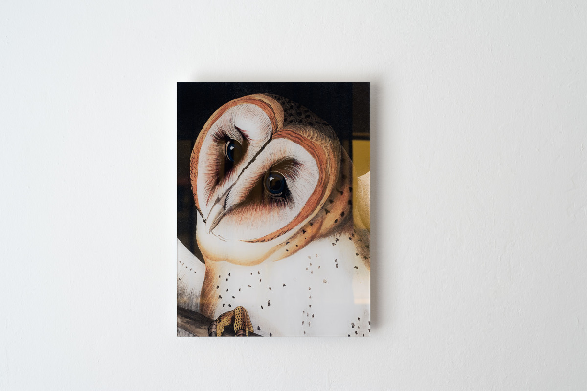 Letter to a Barn Owl